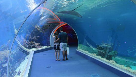 shark-world-tunnel-9474
